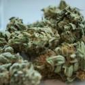 """Cannabis: le bugie dei """"dis-pensatori di morte"""""""